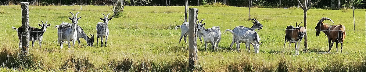Chèvrerie du Houtland